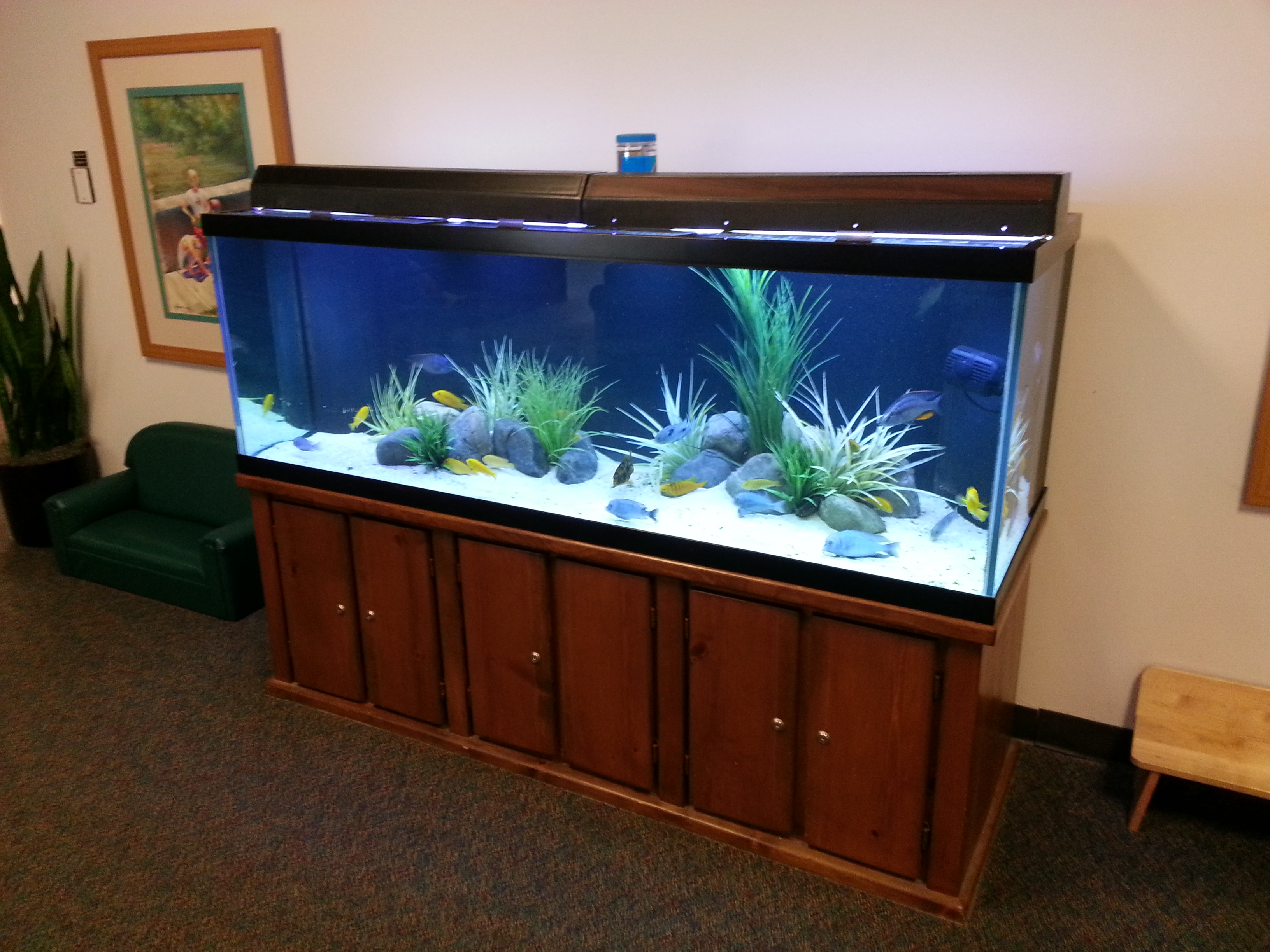 Freshwater displays aquatic creations group inc for 180 gallon fish tank