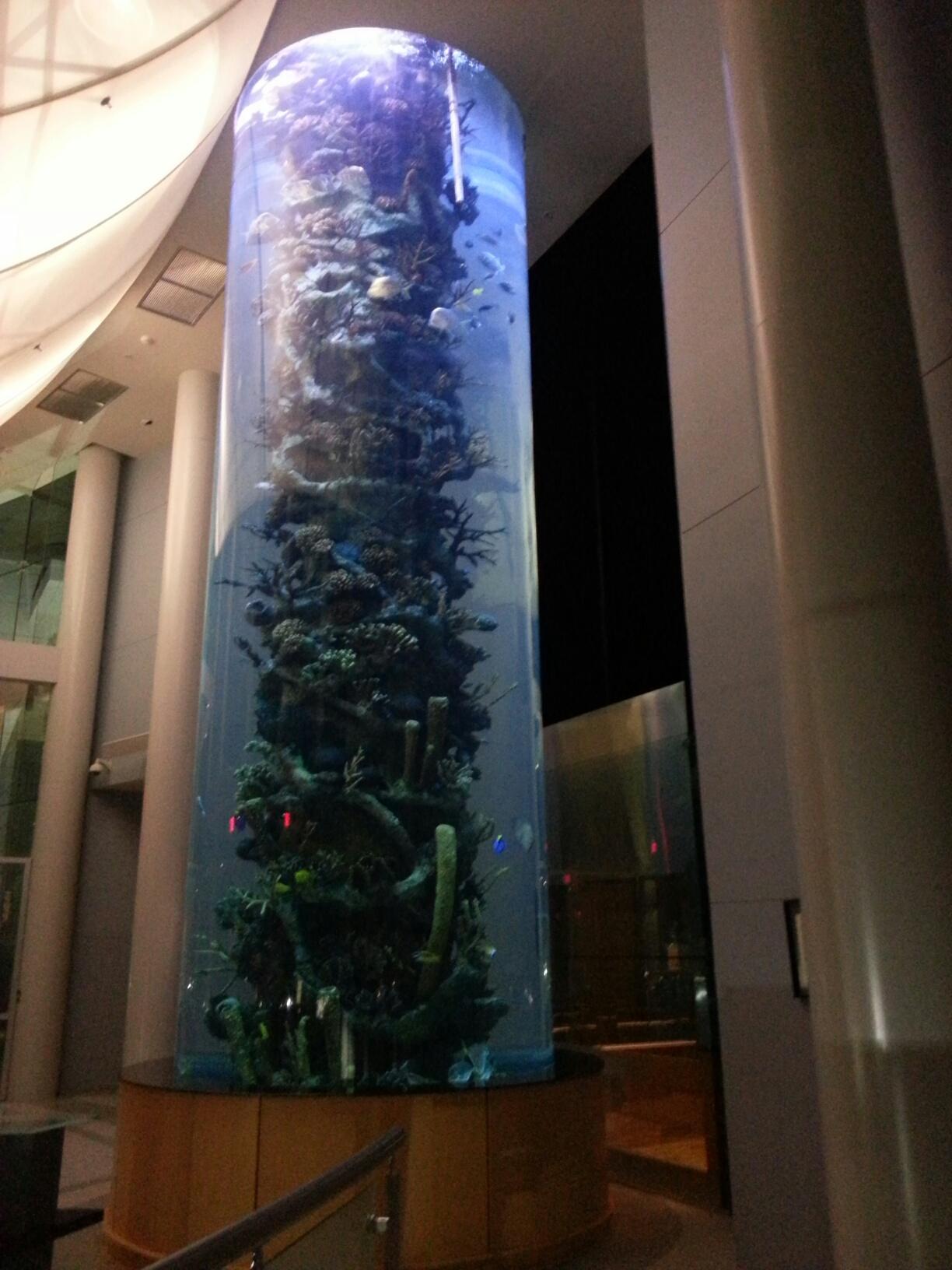 10 000 gallon aquarium aquatic creations group inc for 10000 gallon fish tank